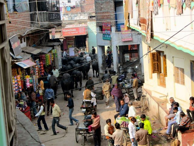 Buffaloes in Varanasi