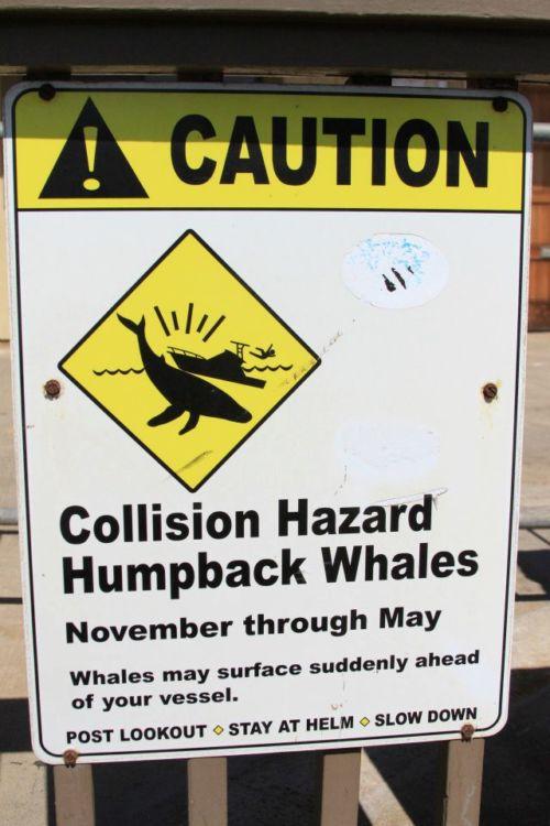 Collision Hazard