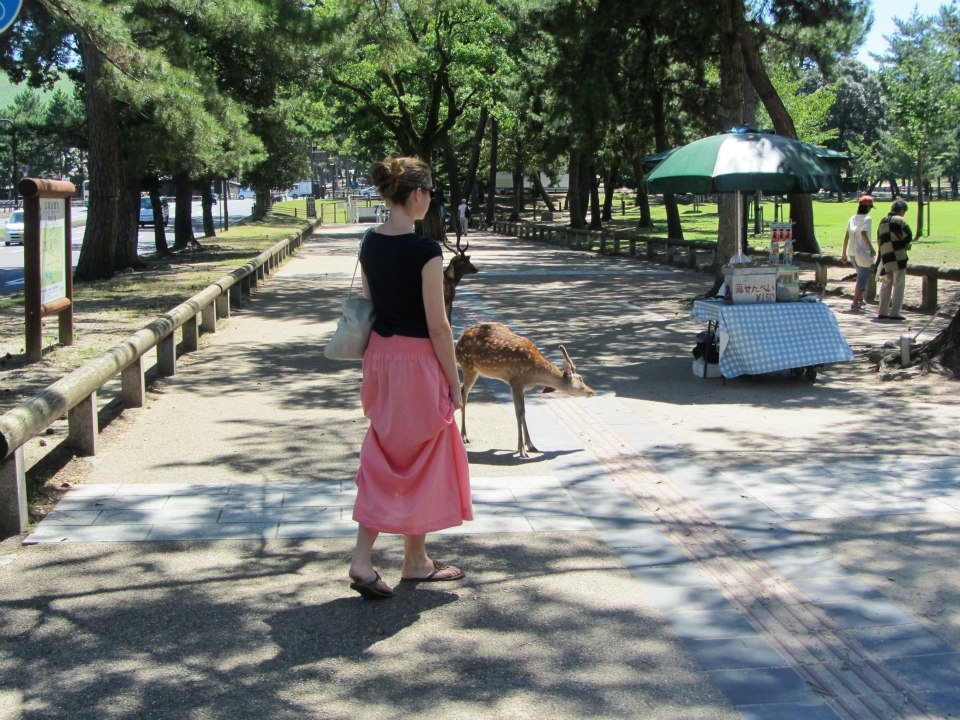 Approaching the deer of Nara