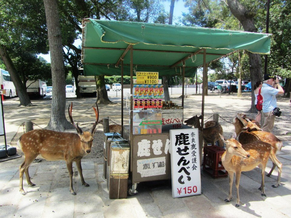 Deer waiting for food in Nara, Japan