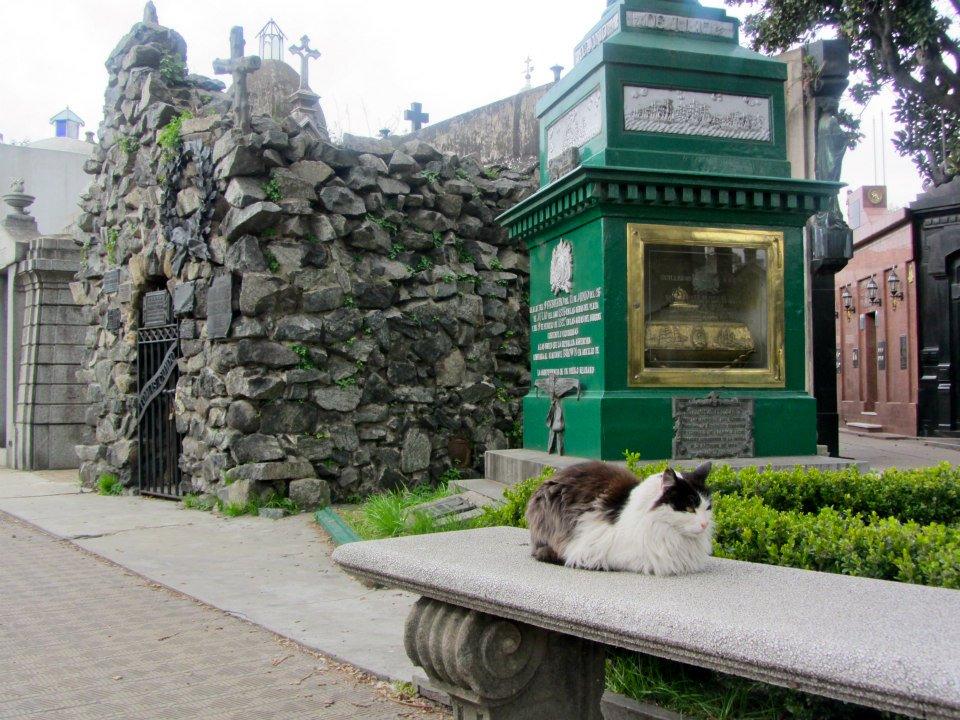Cat in Recoleta Cemetery, Buenos Aires