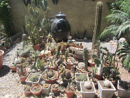 Cactus garden in Salta