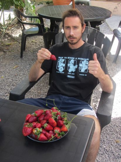strawberries in Salta