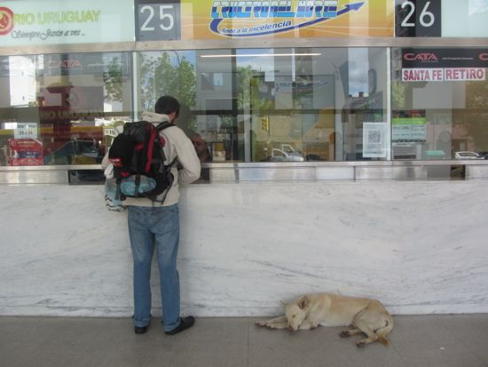 Dog sleeping in Rosario bus station
