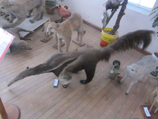 Natural History Museum Sucre, Bolivia