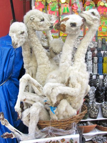 Fuzzy llama fetuses in La Paz, Bolivia