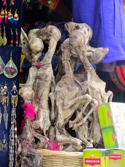 Dried llama fetuses in La Paz, Bolivia
