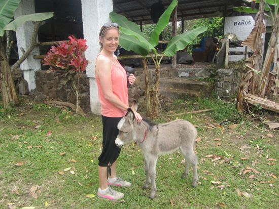Baby Donkey, Galapagos