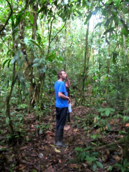 Day hike, Amazon
