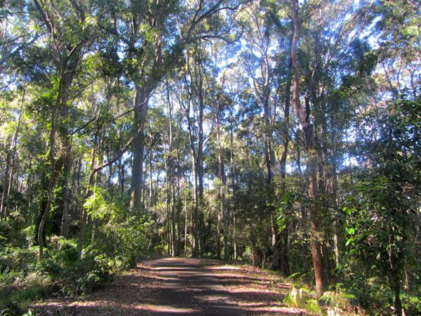 Blackbutt Reserve