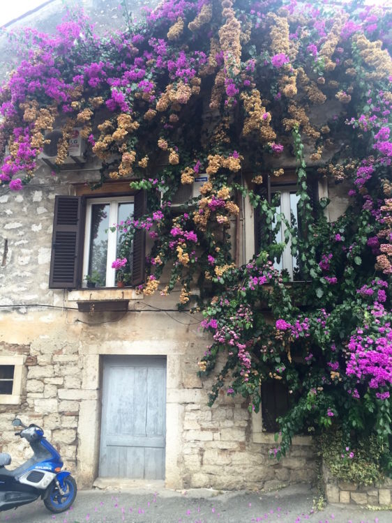 Flowers in Rovinj Croatia