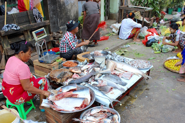 Selling fish Myanmar