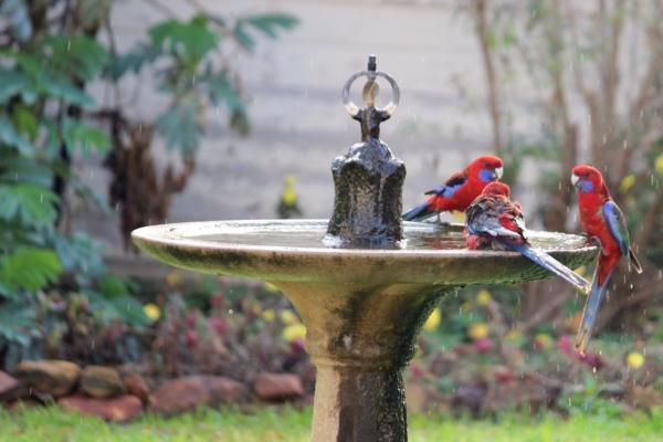 Birdbath NSW