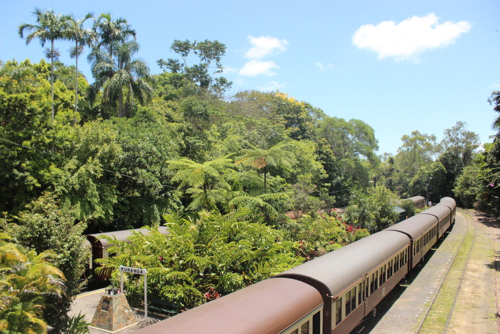 Train in the jungle