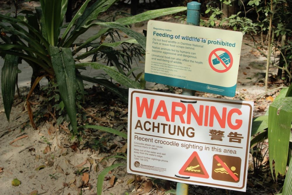 crocodile warnings in the daintree lateral movements