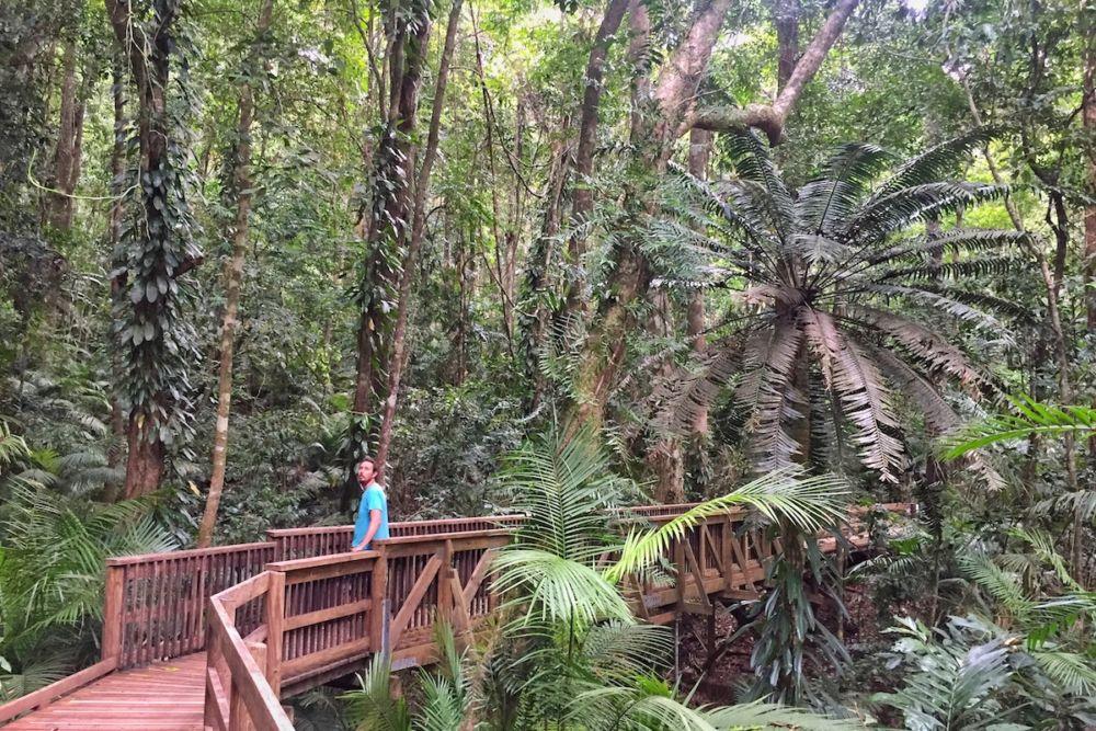 Boardwalk Rainforest
