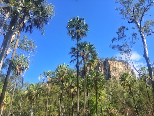 Palm trees gorge