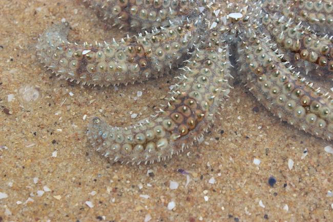 Close up starfish
