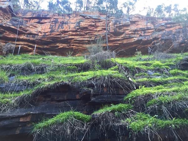 Green moss orange gorge