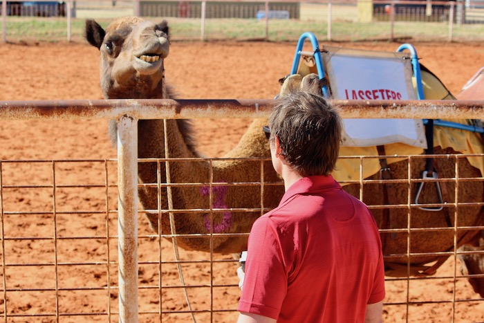 Man looks at camel
