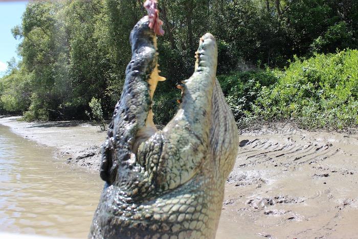 giant crocodile jaw
