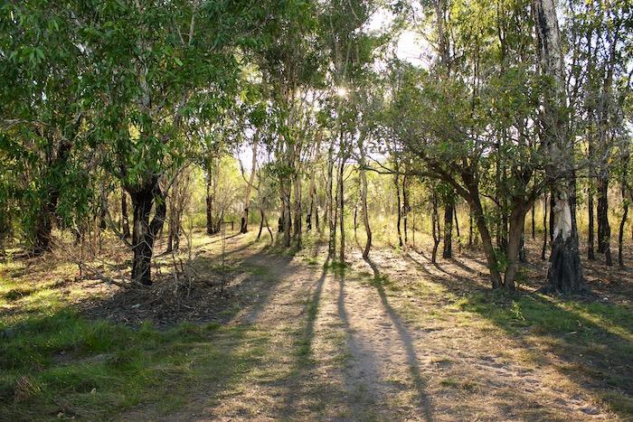 Billabong Kakadu
