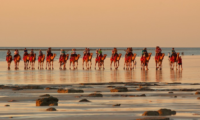 Row of camels Cable Beach