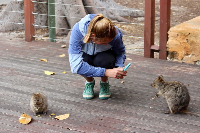 Taking pictures of quokkas