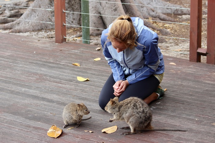 hanging out with quokkas