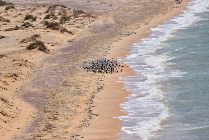 Shark Bay beach