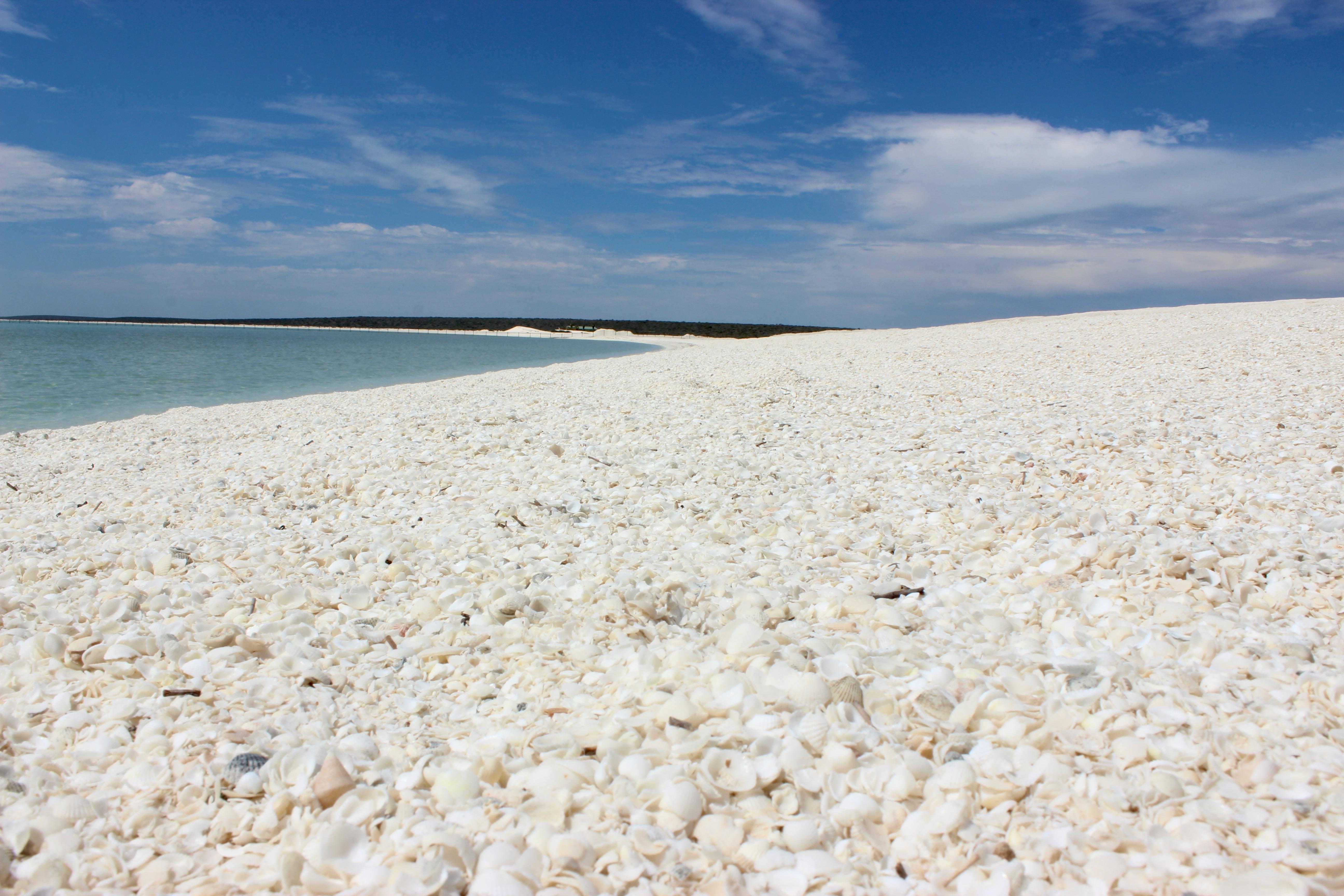 white shell beach